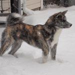 Senka has fun on her first snow day