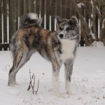 Senka's first snow